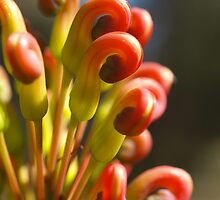 Serpentine Forest Plants Series - Grevillea by kalaryder