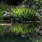 Iris Reflections by Patty (Boyte) Van Hoff