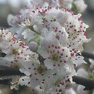 A Bouquet of Spring by GemmaWiseman