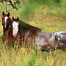 the Horses of Mako's Farm by Geno Rugh