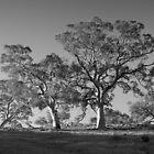 Scary Tree - Horrocks Pass by Ben Loveday