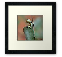 The Very Hungry Caterpillar Framed Print