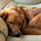 LET SLEEPING DOGS LIE by Joan Harrison