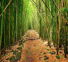 Bamboo Forest by Inge Johnsson