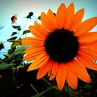 Simple Sunflower by Tevis Potts