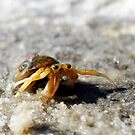 Crabby by Colleen Rohrbaugh
