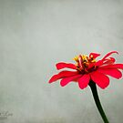 zinnia by janetlee