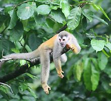 Not Monkeying Around by Ilene Clayton