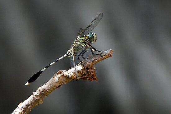 Clour of the fly by JYOTIRMOY Portfolio Photographer