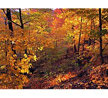 Fiery Forest Photographic Print