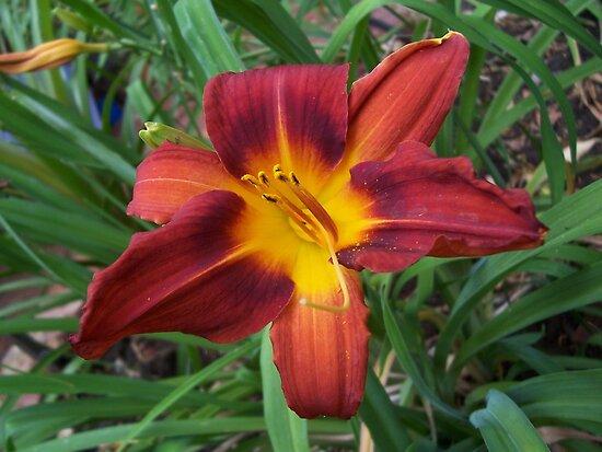 flower in Red by jonolaf
