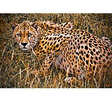 Cheetah in the Grass Photographic Print