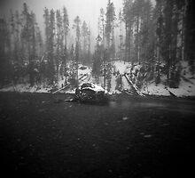 sentinel - Yellowstone NP by Lauren  Hewitt