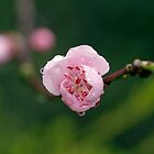 Blossoming by Sangeeta