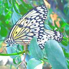 """Double Butterflies"" by Deb  Badt-Covell"