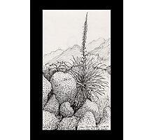 A Desert Scene North of Mount Lemmon, Arizona Photographic Print