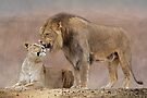 Lions in Love by Krys Bailey
