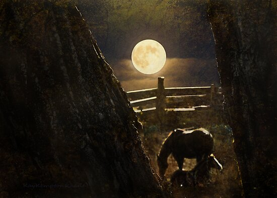 Moonlight for Horses by Kay Kempton Raade