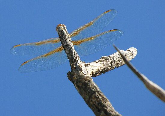 Dragonfly & Seek by Kimberly Chadwick