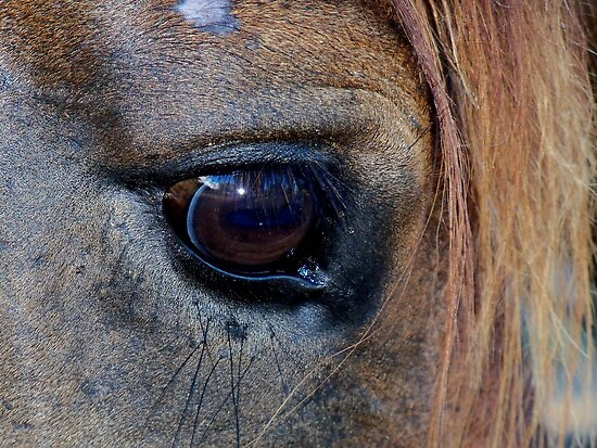 One Eyed Jack - Horse Eye at horse ranch in Florida by Rick Short