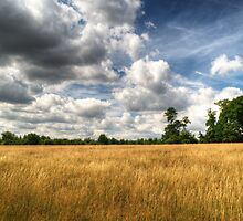 Field of Grass on West Wycombe Hill by Chris Day