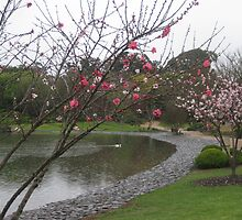 Flowering peaches beside the lake,Japanese Gardens, Toowoomba by Marilyn Baldey