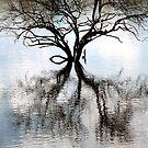 Bare reflection. Pilanesberg National Park, South Africa. by Fineli