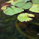 Lily pads at Union Station  by Merrian O. Lucando