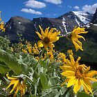 wild sunflower bouquet by JamesA1