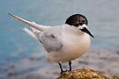 Tern 1 by Werner Padarin