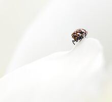 Little Brown Beetle by Rachael Talibart