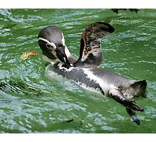 Penguin Wave Photographic Print