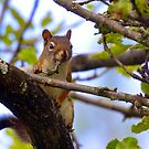 Western Montana Squirrel  by amontanaview