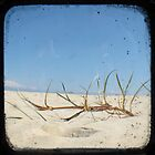 Grassy Dunes - TTV #4 by Kitsmumma