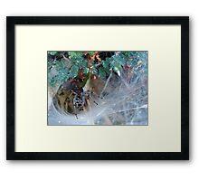 Funnel Web Spider Framed Print