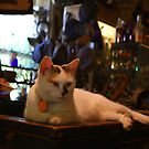 Store Keepers Cat - Antique Store Fort Ancient by Tony Wilder