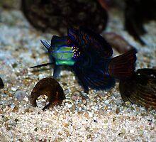 Fish Kiss by Carol Barona