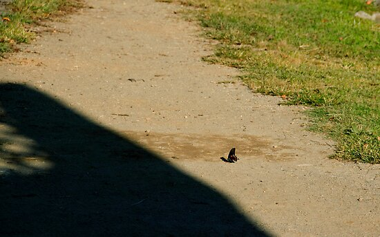 Butterfly on a Path by Jay Gross