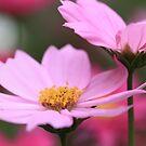 Happy Pretty Pink Tuesday by malina