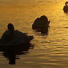 Sunset swans by HannahT