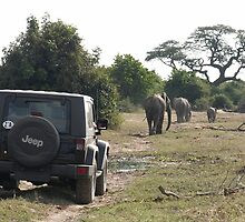 Chobe Game Park Botswana by Mark Braham