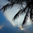 Palm Tree at Sunset by Caren