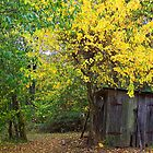 Uncle Jack's Old Shed by Susan Blevins