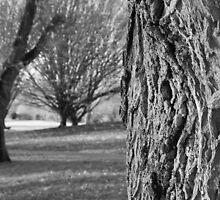 Mono trees by Tony Reed
