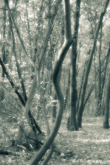 Tree Shapes Louis Campbell Nature Preserve by Mitch Labuda