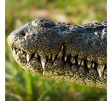 Chobe National Park, Botswana. 2009 Photographic Print