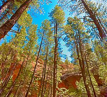 Tall trees of Arizona by LudaNayvelt