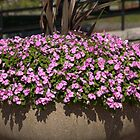 Charlestown Purple Flowers 2 by photosbycoleen