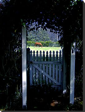 Looking Through the Arbour! by Gabrielle  Lees