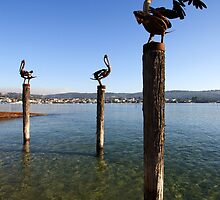 Merimbula Lake by Darren Stones